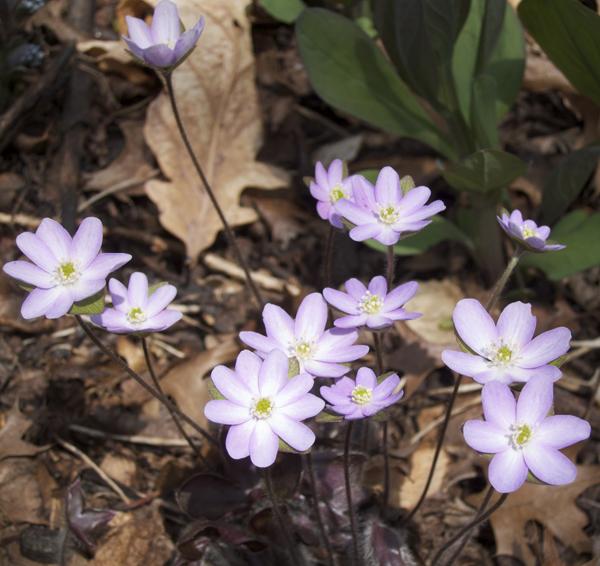 Spring-Flower-Sassaman-Garden