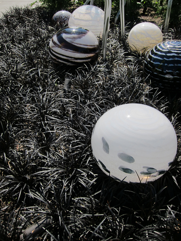 Chihuly:Black Grass