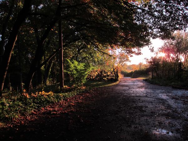 Autumn Morning 2013
