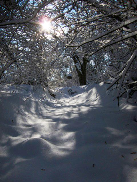 Gantner Winter Light