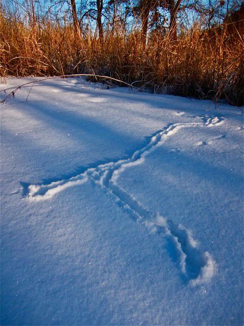 Mole Tracks
