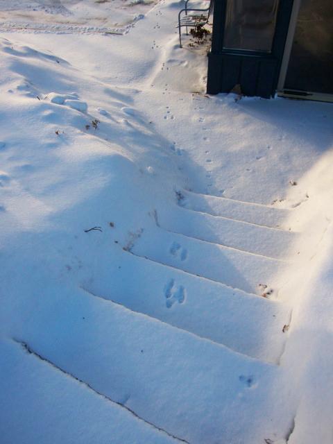 Snow Bunny Tracks